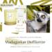 AVA and MAY Madagaskar Duftkerzen Erfahrungen Ocean avamay Kerzen beautycatze